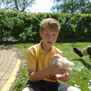 Excellent Eagles get to grips with the chickens!