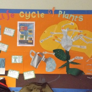 The Lifecycle of Plants