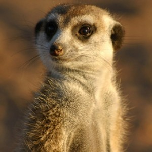 Marvellous Meerkats - Half Term Overview
