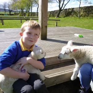 WW investigate rocks and meet Charlie's lambs