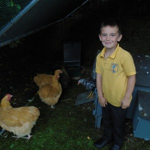 Our chickens are big now